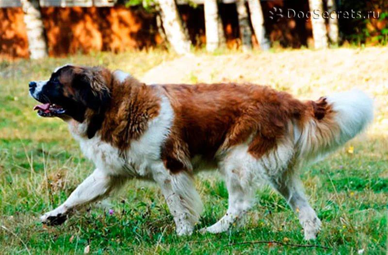 О жизни замечательных собак