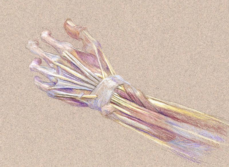 Упражнения при артрозе рук, которые принесут облегчение