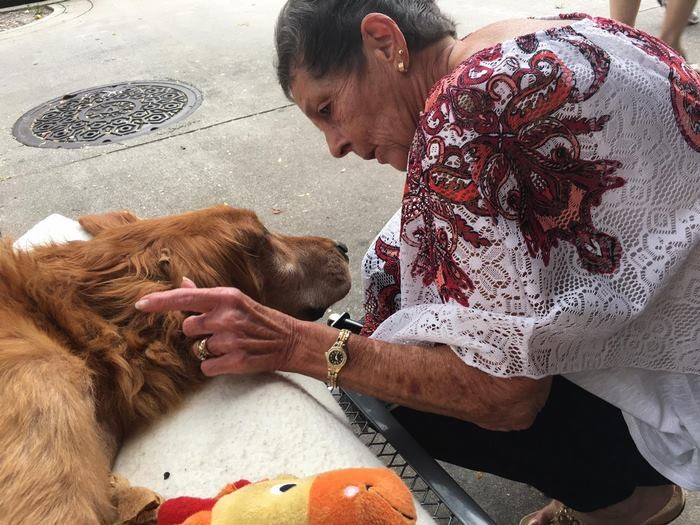 Когда любовь творит чудеса добро, животные, собака