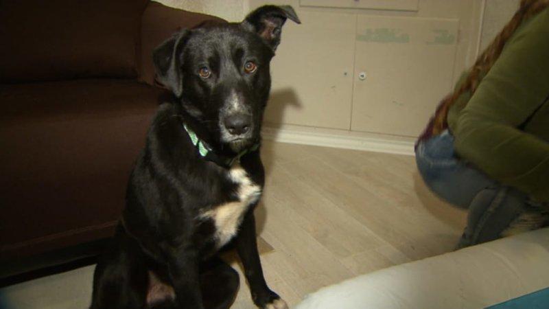 Пёс-бродяга привел спасателей в чащу леса, где находились нуждающиеся в помощи щенки и их мать