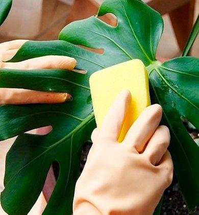 МИР РАСТЕНИЙ. Закон выращивания комнатных растений (9)