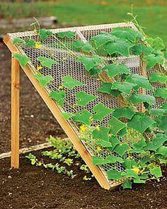 Идеи для сада и огорода.