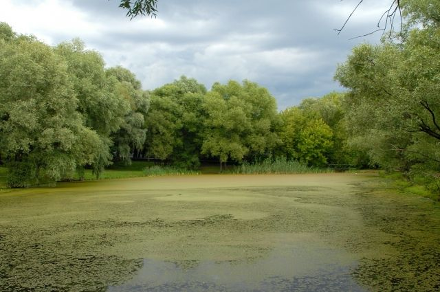 Как не заразиться гельминтами в пресном водоёме?