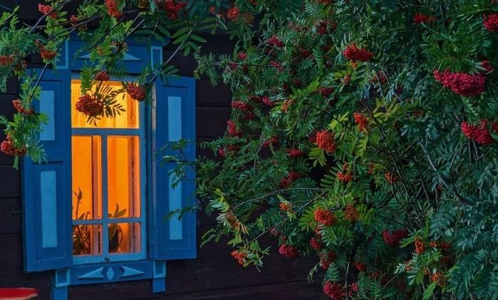 Посадите рябину возле своего дома.