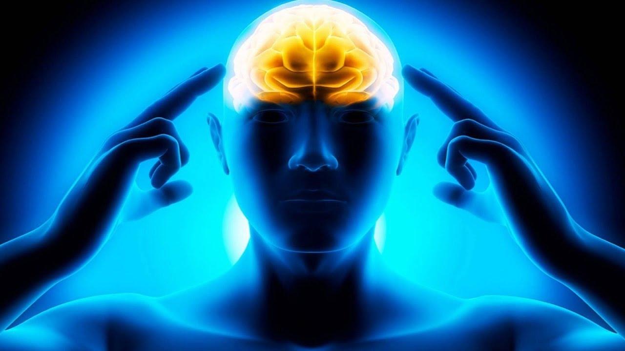 Мозг. Инструкция по применению 11