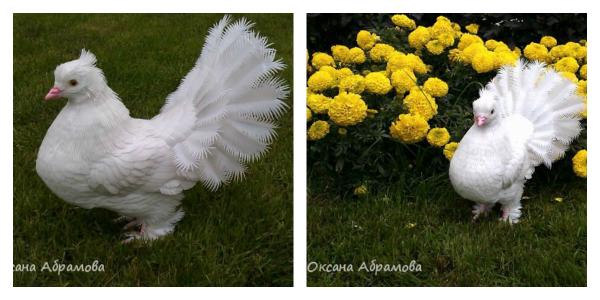 Королевский голубь из пластиковых бутылок… Вы не поверите, но голубь сделан своими руками!