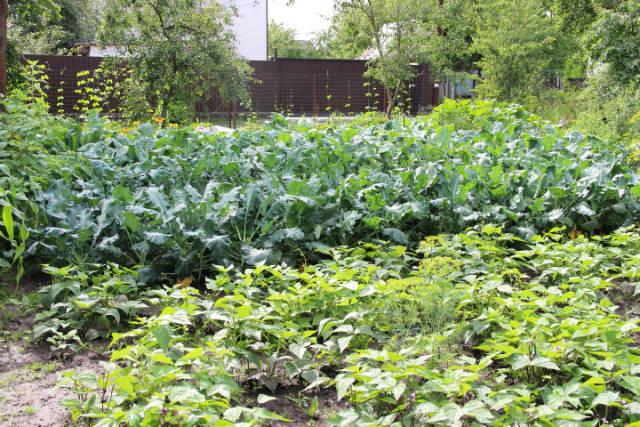 Органическое земледелие: с чего начать?