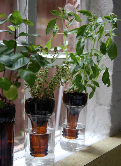 Бутылочный сад. Интересная идея