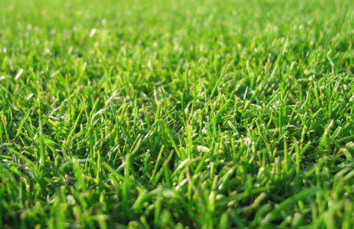 Смесь трав для газона