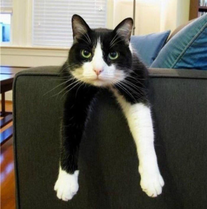 Декор мягкой мебели порванной котом