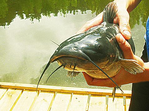 Рыбный реестр ЕАЭС расширяется