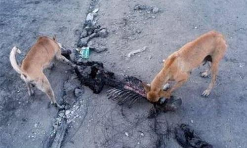 Под Киевом собаки загрызли силовика, воевавшего в Донбассе