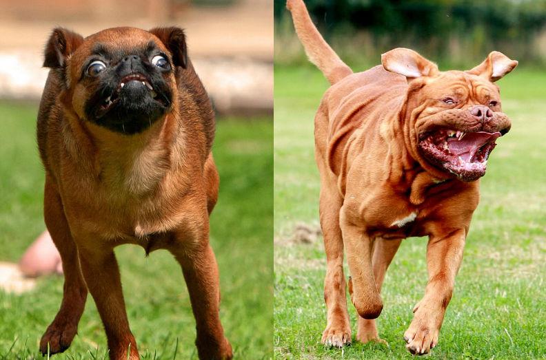 Фотограф и бегущие собаки