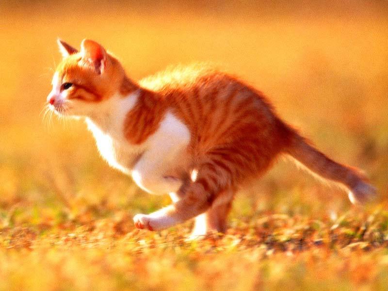 Кошачьи видео-приколы!!!