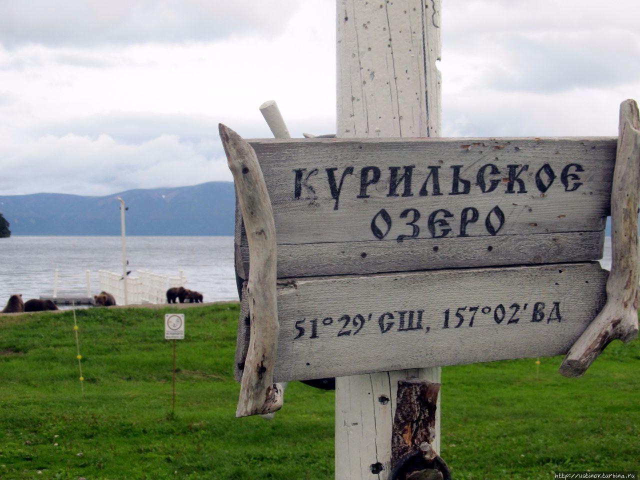 """Жизнь в """"медвежьем углу"""", или История волонтера на Курильском озере"""