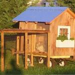 Курятники фото: 40 красивых курятников на даче