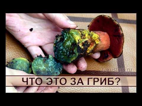 Что это за гриб?