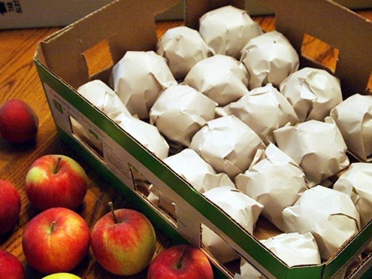 Надо ли заворачивать яблоки в газету?