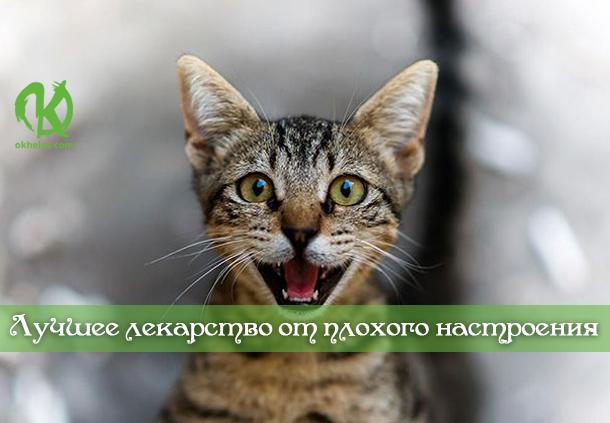 Кота заводят, чтобы кот был маяком во тьме невзгод…