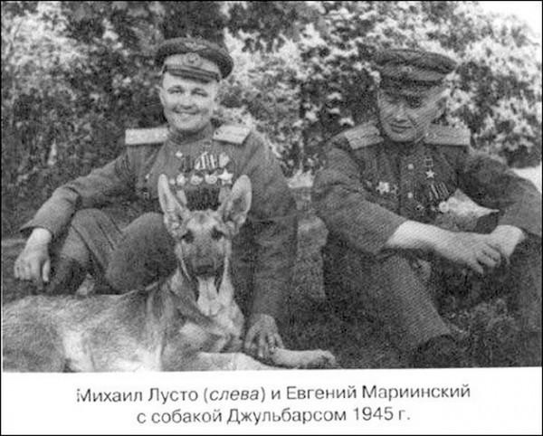 Псы-солдаты во время Великой Отечественной
