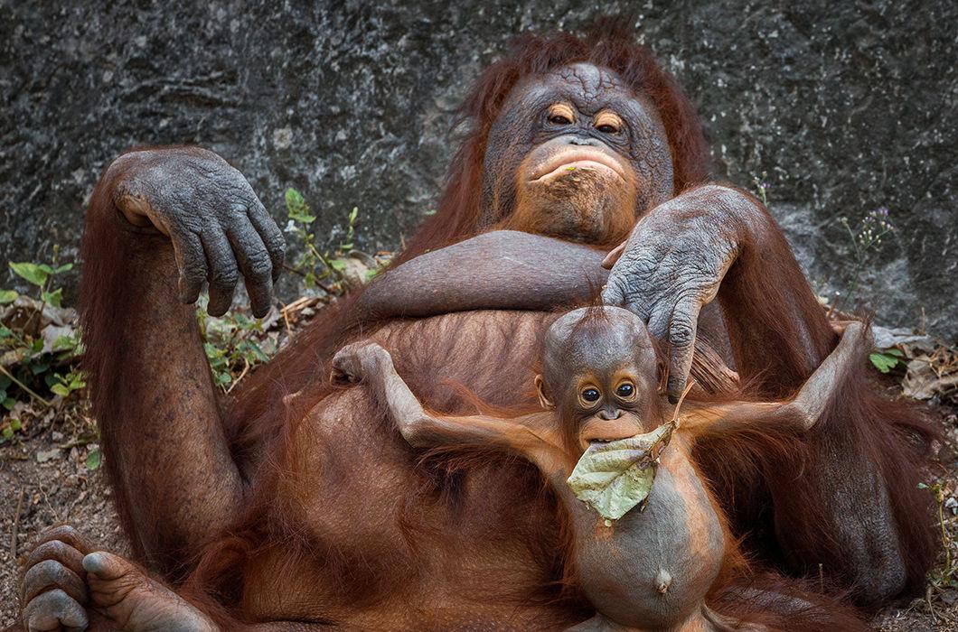 Толстячки из мира животных