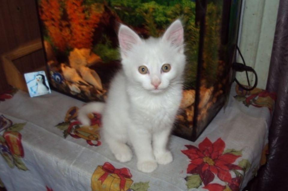 Житель Новочеркасска выставил на продажу котенка за 2,5 млн рублей