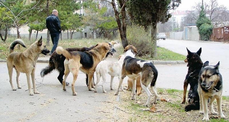 7 приемов, которые спасут тебя при нападении бешеного пса. Запомни раз и навсегда!