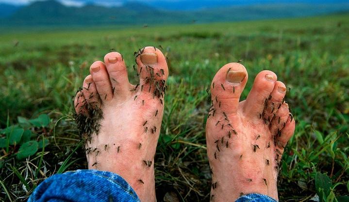 Три лучших средства от комаров и клещей. Дешево, безопасно, эффективно