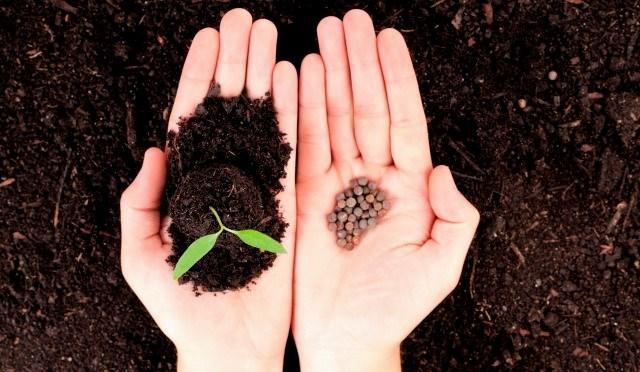 Готовим семена к посеву на рассаду: этапы и способы