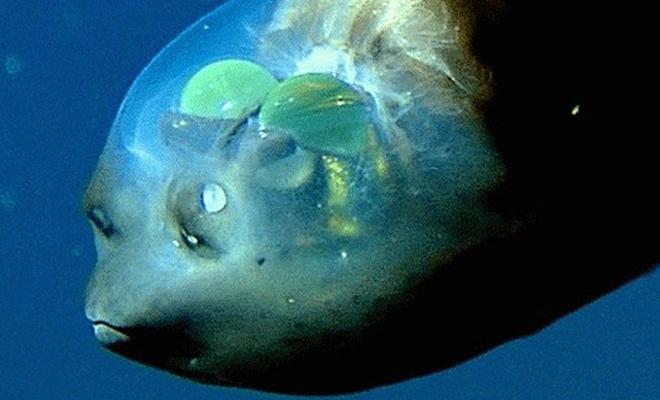 Эта рыба выглядит так, будто прилетела с другой планеты. Убедитесь сами!