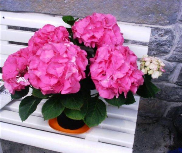 домашние цветы знаком зодиака