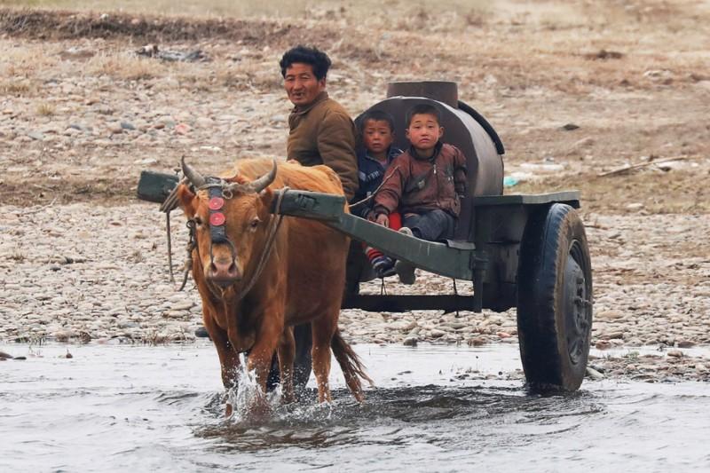 13. Северокорейский фермер едет вдоль границы, 30 марта 2017. (Фото Damir Sagolj | Reuters): Тоталитаризм, гранциа, китай, севераня корея