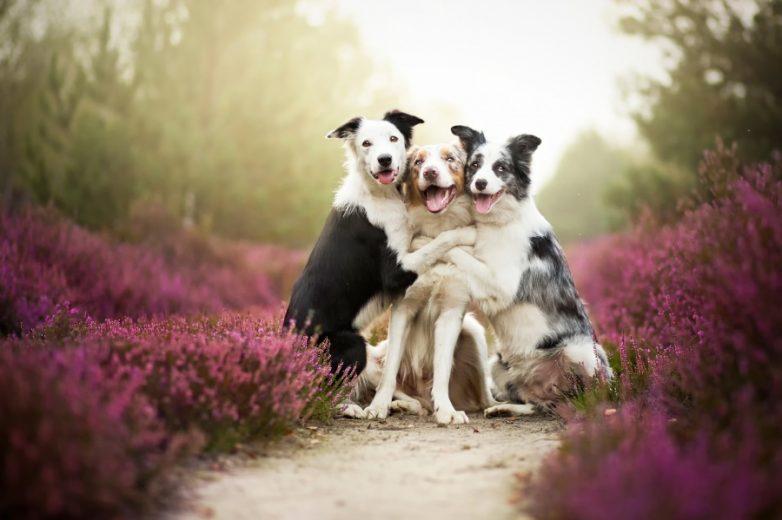 Невероятные портреты собак