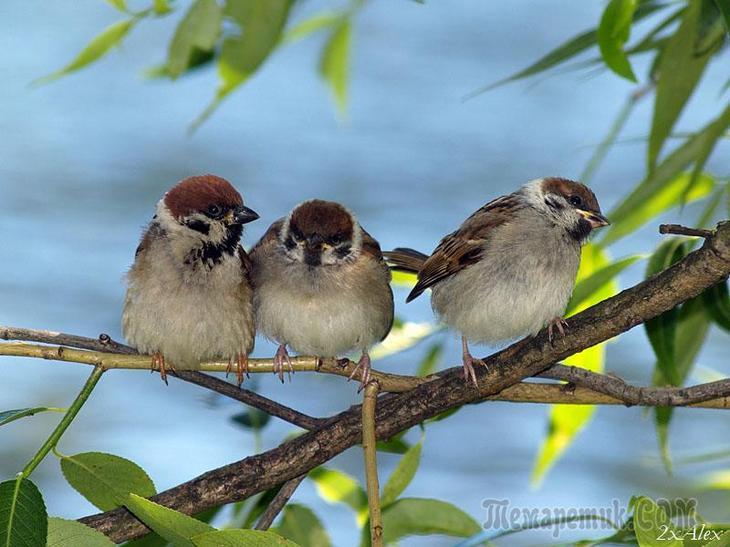умные птицы