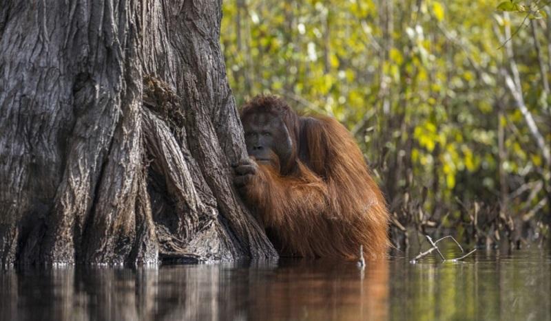 Финалисты конкурса «Лучший фотограф природы — 2017» от National Geographic