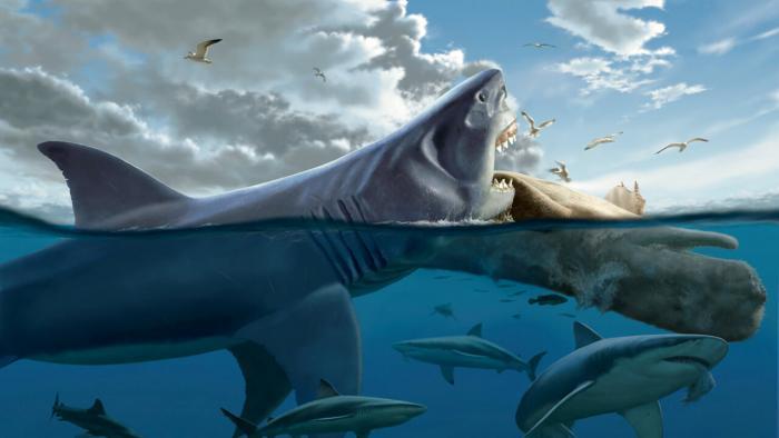 10 самых больших акул в мире…
