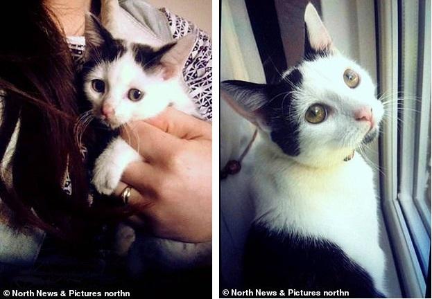 Хозяйка думала, что ее кот умер, но через три года он вернулся живым