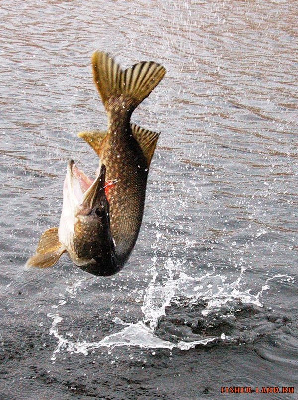 рыбалка рыба крючок