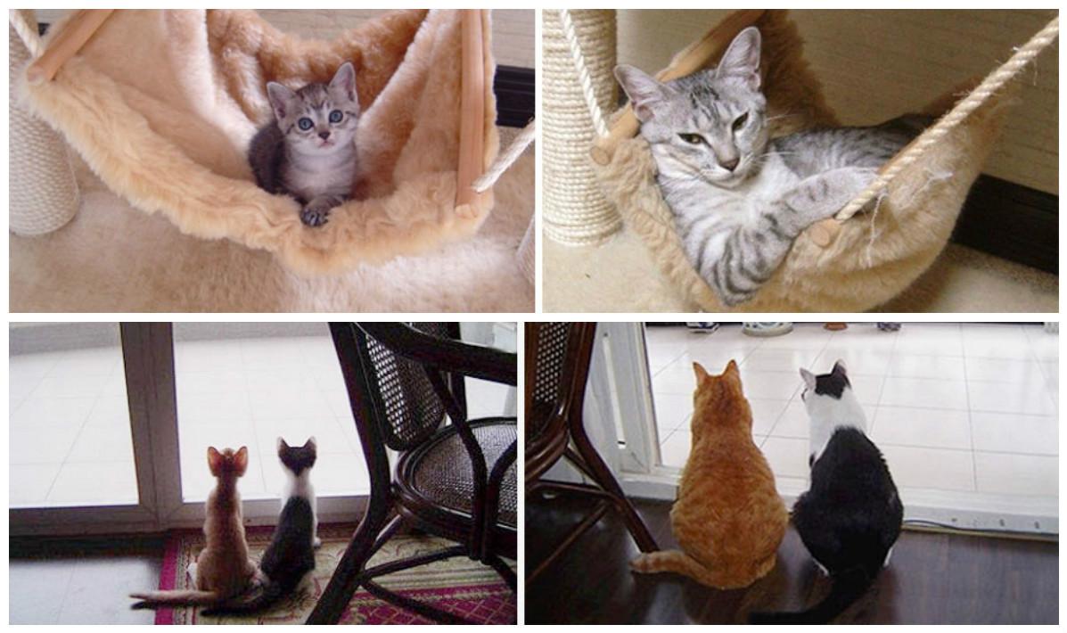 Привычки котов со временем н…