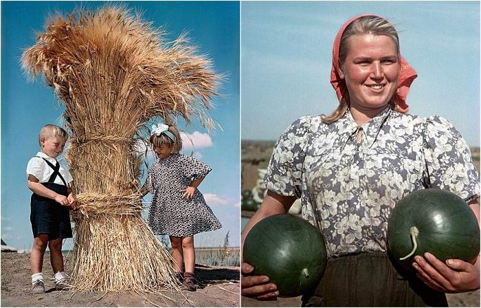 «Здравствуй, земля целинная»: 25 цветных фотографий о жизни целинников из архива журнала «Огонек»