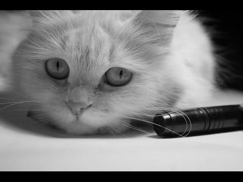 Кот, голодный и несчастный. А почему вы улыбаетесь?