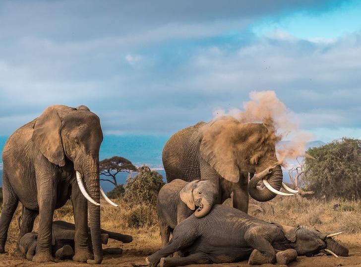 Потрясающие фотографии от National Geographic в 2018 году