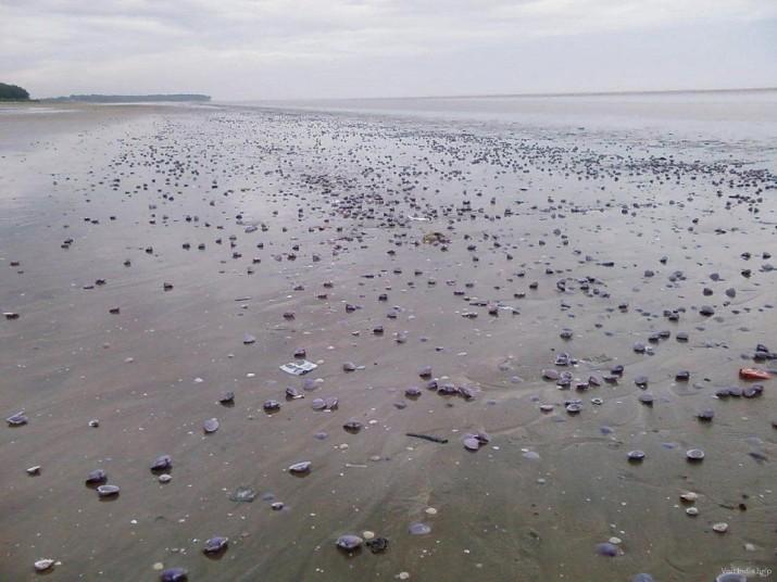 Пляж Чандипур, Индия
