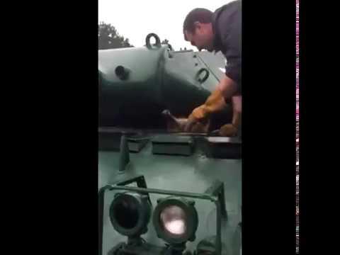 Тостопопый,освободи место! :Енот застрял в американском танке «Уокер Бульдог»