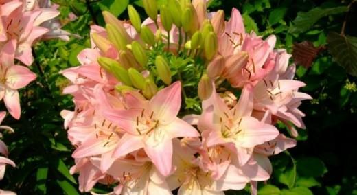Памятка для садовода: растения, которые не стоит покупать