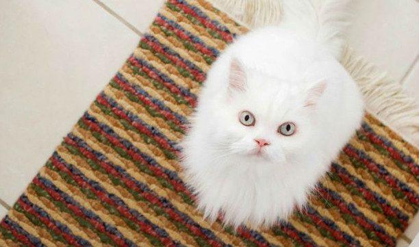 Проверенный способ избавиться от пятен мочи домашних животных