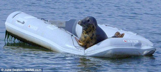 два пловца спрыгнули одновременно с лодки и поплыли по реке краткая запись