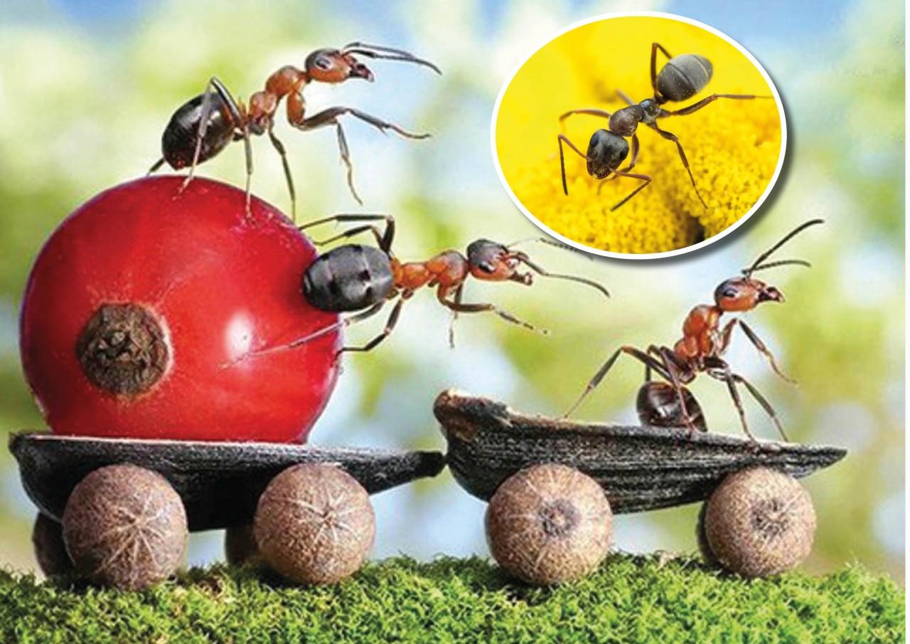 Три простейших и надежных способа борьбы с садовыми муравьями