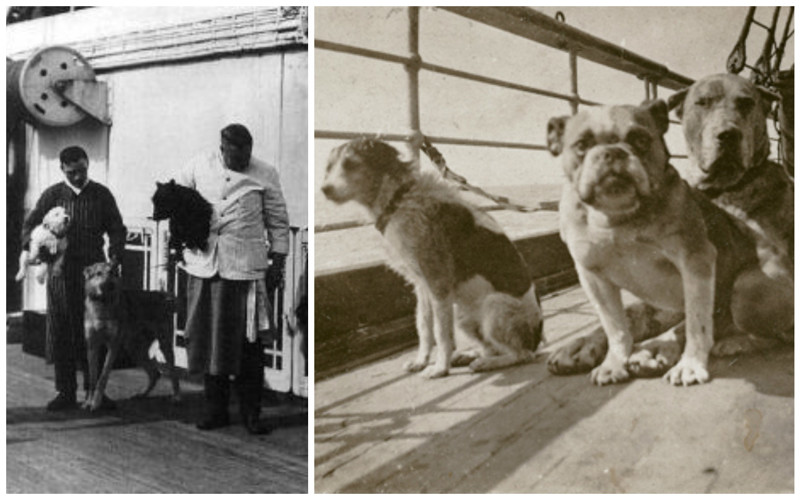 Еще одна ужасная сторона в трагедии Титаника история, кошмар, погибшие, собаки, титаник