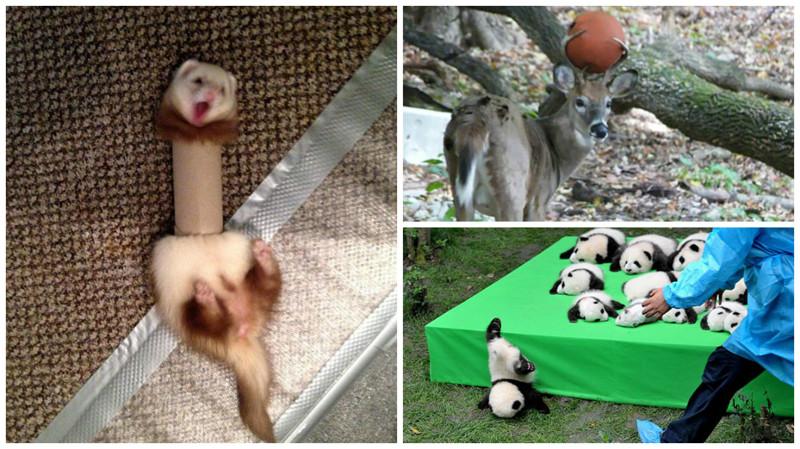 Самые эпичные провалы животных, которые мы видели(29 фото)